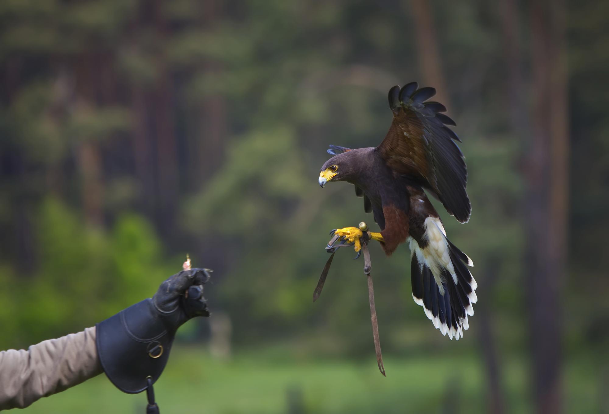 bird-control